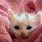 あなたの疲れた心に休息を!3つの動物動画をご紹介!