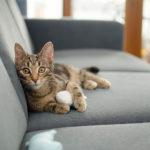 タブを開くたびにカワイイ猫のイラストがお出迎えしてくれる拡張機能「Tabby Cat」